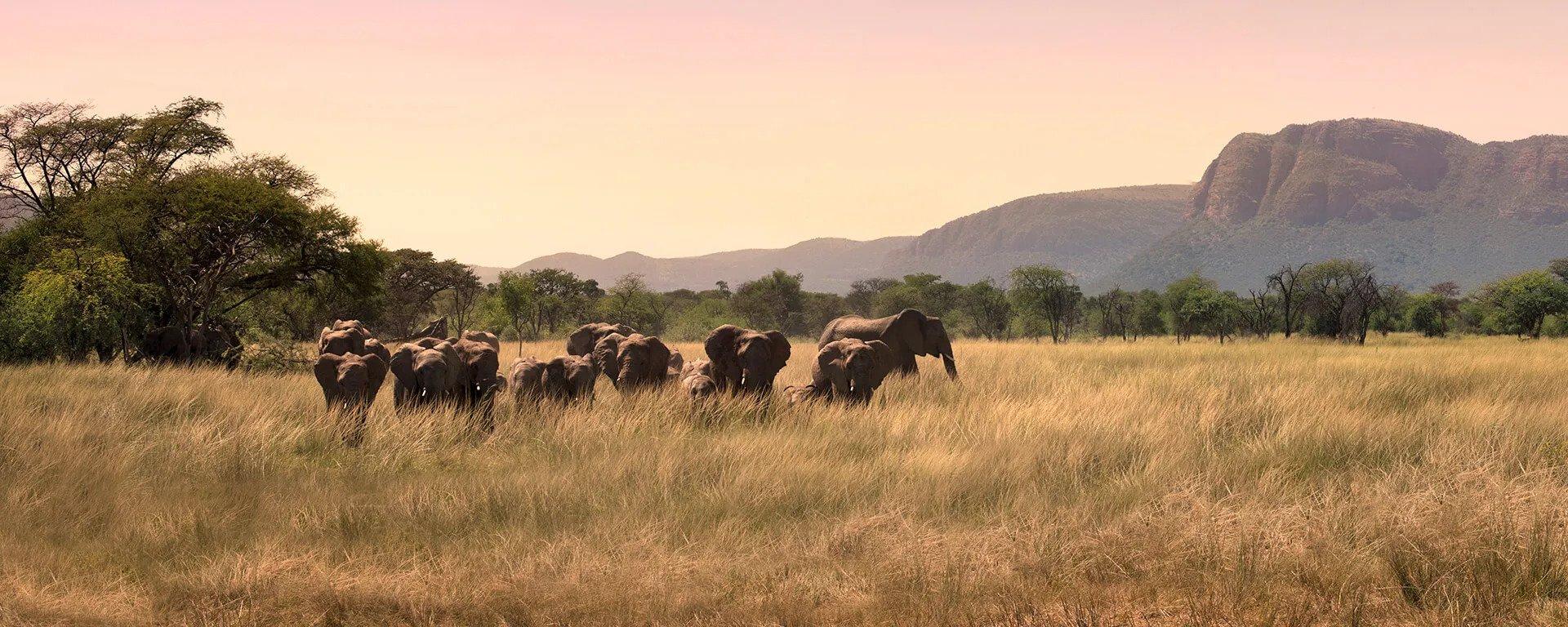 4-Day Ruaha NP Game Drive & Walking Safari
